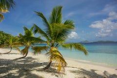 Grupa Trzy drzewka palmowego Zdjęcie Royalty Free