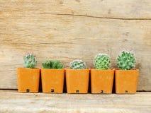 Grupa trzy kaktusowej rośliny na drewnianym tle obrazy stock