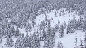 Grupa turyści iść przez zima śnieżystego lasu w średniogórzach zbiory wideo