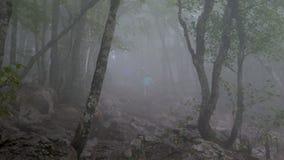 Grupa turyści iść przez ponurego mgłowego lasu zbiory wideo