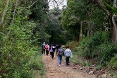 Grupa turyści w lasowym spacerze wzdłuż wąskich ścieżek fotografia royalty free