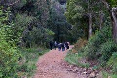 Grupa turyści w lasowym spacerze wzdłuż wąskich ścieżek obraz royalty free