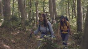 Grupa turystyczni ludzie chodzi na lasowej ścieżce podczas gdy lato podróż zbiory
