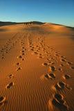 Grupa w pustyni Zdjęcie Royalty Free