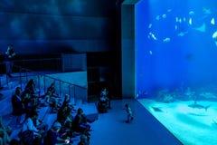 Grupa widzowie podziwia wielkiej skala sealife oceanarium wi Fotografia Stock
