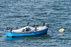 Grupa Wielcy kormoranów ptaki na łodzi w Draycote Nawadnia jezioro, UK obrazy royalty free