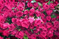 Grupa wiele różowi różanego bukiet zdjęcia royalty free