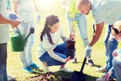 Grupa wolontariuszi zasadza drzewa w parku Fotografia Royalty Free