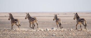 Grupa zebry jedzie na horyzoncie w Namib pustyni przy Namib-Naukluft parkiem narodowym, Namibia, Afryka Fotografia Stock