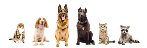 Grupa zwierzęta domowe siedzi wpólnie Fotografia Stock