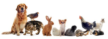 Grupa zwierzęta domowe Fotografia Stock