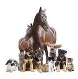 Grupa zwierzęta domowe Obraz Stock
