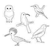 Grupo africano do vetor dos desenhos animados do Abelha-comedor de Owl Hoopoe Starling do livro para colorir do pássaro Foto de Stock