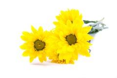 Grupo amarelo da flor fotografia de stock