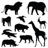 Grupo animal da ilustração da silhueta do safari Fotos de Stock