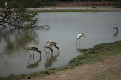 grupo animal do planeta de pássaros Imagem de Stock