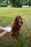 Grupo animal do salvamento Cão do salvamento Imagem de Stock
