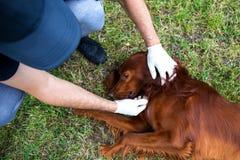 Grupo animal do salvamento Cão do salvamento O trabalho de um veterinário Foto de Stock