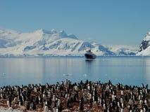 Grupo antártico del pingüino Fotos de archivo