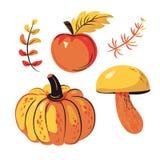 Grupo Apple da colheita do outono, abóbora, cogumelos ilustração do vetor