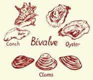 Grupo, búzio, ostra e moluscos do bivalve, com inscrição ilustração royalty free