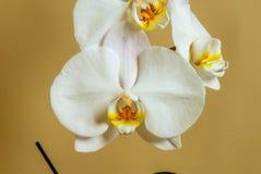 Grupo bonito da orquídea branca fotografia de stock