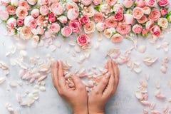 Grupo bonito da terra arrendada da mão da mulher das pétalas cor-de-rosa fotos de stock