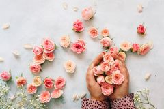 Grupo bonito da terra arrendada da mão da mulher de mini rosas fotografia de stock
