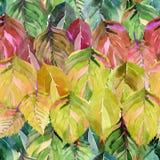 Grupo bonito das folhas de outono como o arco-íris F brilhante gráfico ilustração stock