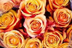 Grupo bonito de flores Imagem de Stock