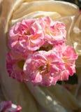 Grupo bonito de florescência das rosas no jardim Foto de Stock Royalty Free