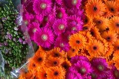 Grupo bonito do gerbera alaranjado e cor-de-rosa, vista superior Imagem de Stock Royalty Free