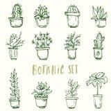 Grupo botânico Flores do cacto ilustração do vetor