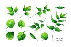 Grupo brilhante de folhas da mola Samambaia da viola, do anfitrião, do pântano-cravo-de-defunto e de azevinho ilustração do vetor
