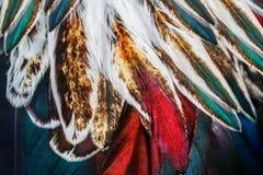 Grupo colorido brillante de la pluma de algún pájaro Fotografía de archivo libre de regalías