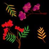 Grupo colorido das folhas do outono isolado no fundo branco Cole??o dos desenhos animados no estilo liso Vetor ilustração stock