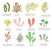 Grupo colorido do vetor de algas ilustração stock