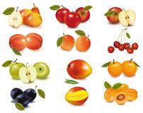 Grupo com sortes diferentes da fruta. Vetor. Fotos de Stock