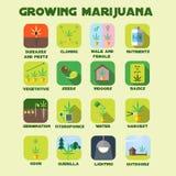 Grupo crescente do ícone da marijuana Fotografia de Stock