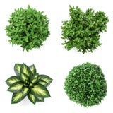 grupo 3d das plantas home Imagens de Stock