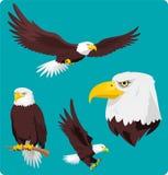 Grupo da águia americana Imagens de Stock