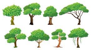 Grupo da árvore ilustração do vetor