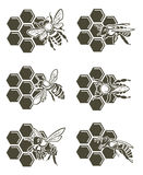 Grupo da abelha e do mel Foto de Stock