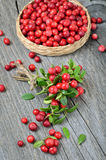 Grupo da airela vermelha Foto de Stock