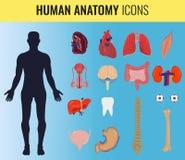 Grupo da anatomia do órgão humano Vetor Fotografia de Stock