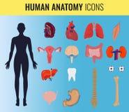 Grupo da anatomia do órgão humano Vetor Imagens de Stock