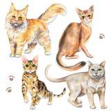 Grupo da aquarela com quatro raças diferentes dos gatos ilustração do vetor