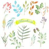 Grupo da aquarela de elementos florais, de ramos e de folhas Fotografia de Stock Royalty Free