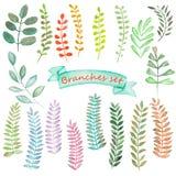 Grupo da aquarela de elementos florais e de folhas Imagens de Stock Royalty Free