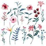 Grupo da aquarela de elementos naturais tropicais florais do vintage fotografia de stock